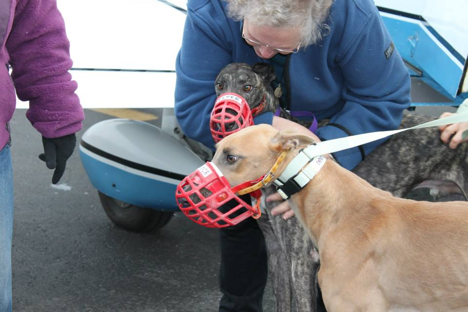 Loving care for the passengers. Photo courtesy Nittany Greyhounds